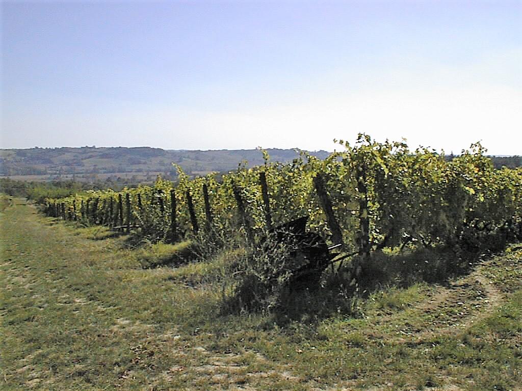 St Nazaire-de-Valentane point de vue vignes